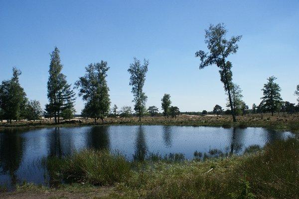 Bos, water, heide - heerlijk om te picknicken